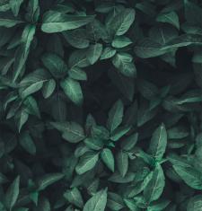 planten in huis verzorgen